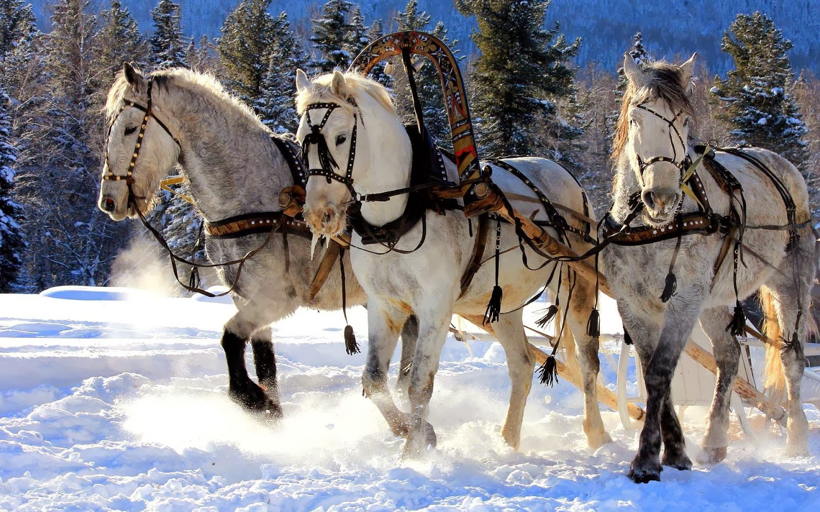 christmas sleigh horses 1920x1080 wallpaper - photo #43