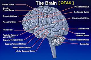 10 Fakta Unik Tentang Otak