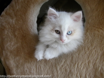 Cute white cat.