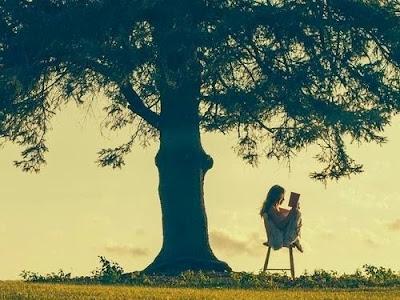 Memilih Sebuah Pohon [Tes Kepribadian]
