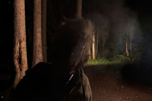 what the hell, scary picture, bettlejuice, forest, at night, dark image