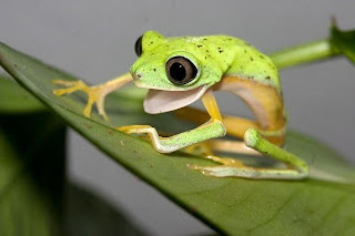 Funny Cute Little Frogs