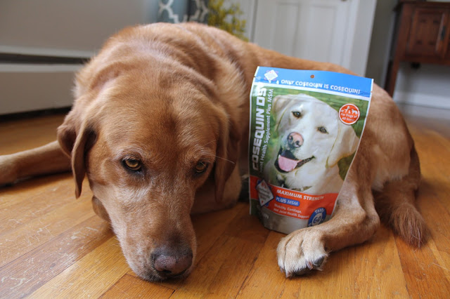 dog health maintaining healthy hips and joints in dogs Cosequin supplement