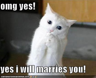 funny pictures excited proposal cat click on this post