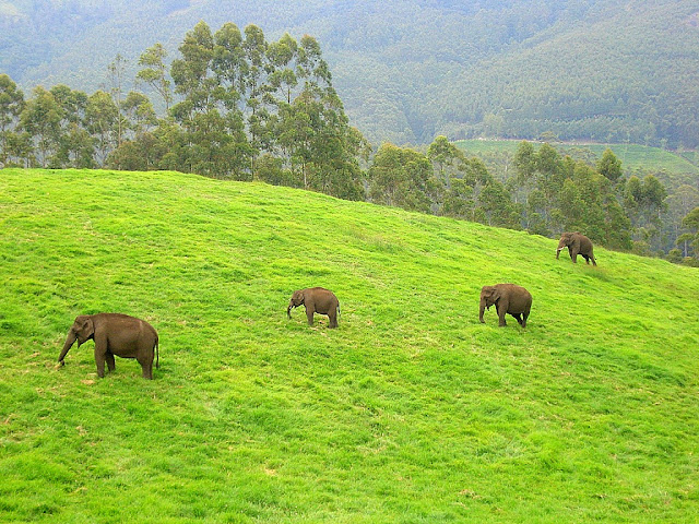 book your budget wild life tour in munnar