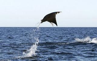 3 Binatang Laut Yang Bisa Terbang
