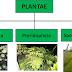 PLANTAE ( Bahan Ajar Kelas X )