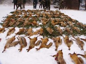 Petition gegen die Fuchsjagd