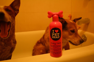 Brisbane and Sisci in the tub with a bottle of Pet Head shampoo