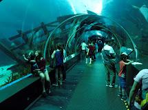 Underwater in Glass Aquarium