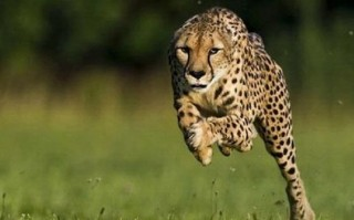 Hewan Berkecepatan Tinggi