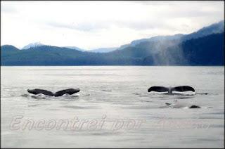 As baleias do Alasca.