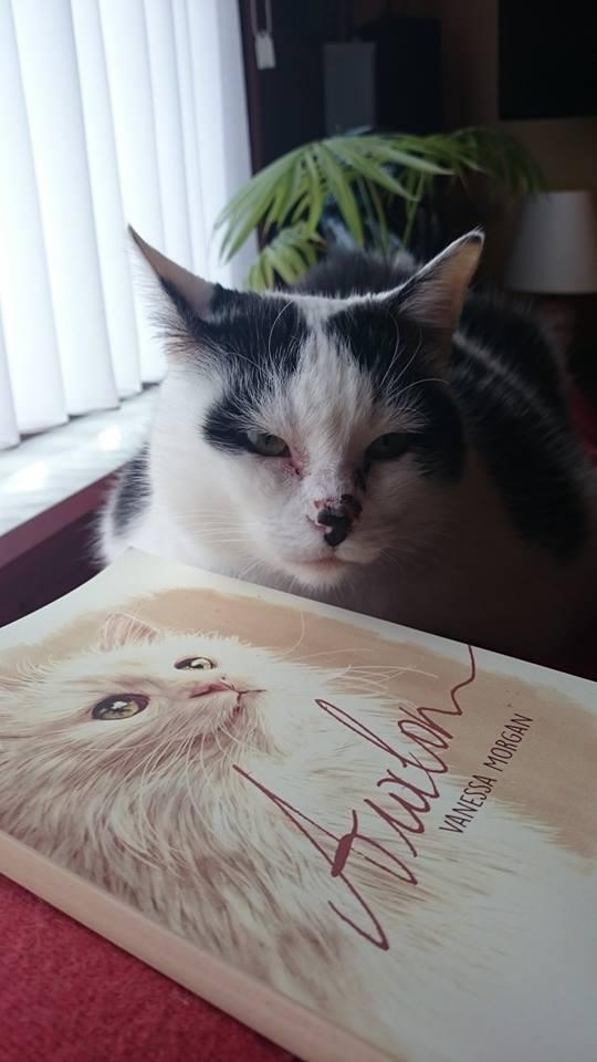 cutest tuxedo cat