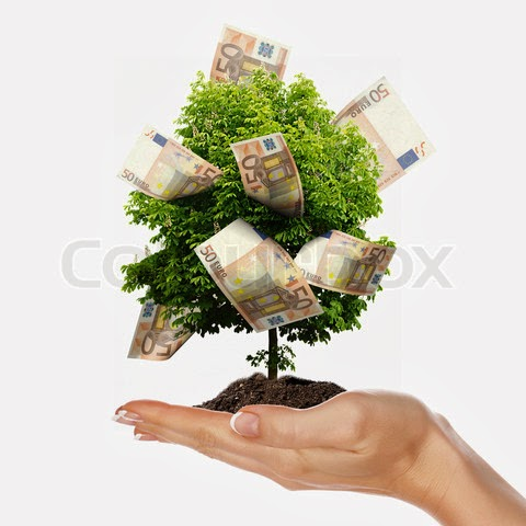 how to bring my money tree back to life