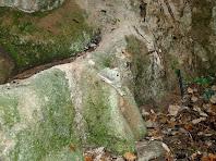 Detall de la tosca formada a la font de l'Estevet