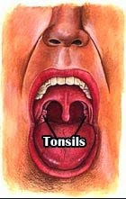 Tonsils Healthy