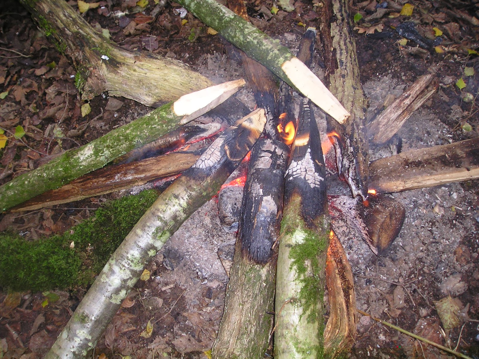 Wilderness Survival Skills and Bushcraft Antics: Building ...