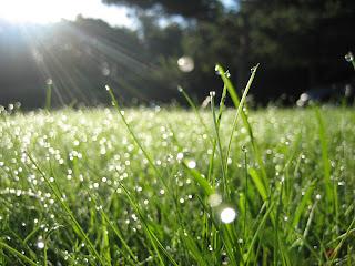 Hujan, Rumput, Tanah, Ibarat Tanah dan Hujan, Embun, Embun Pagi, Morning Dew