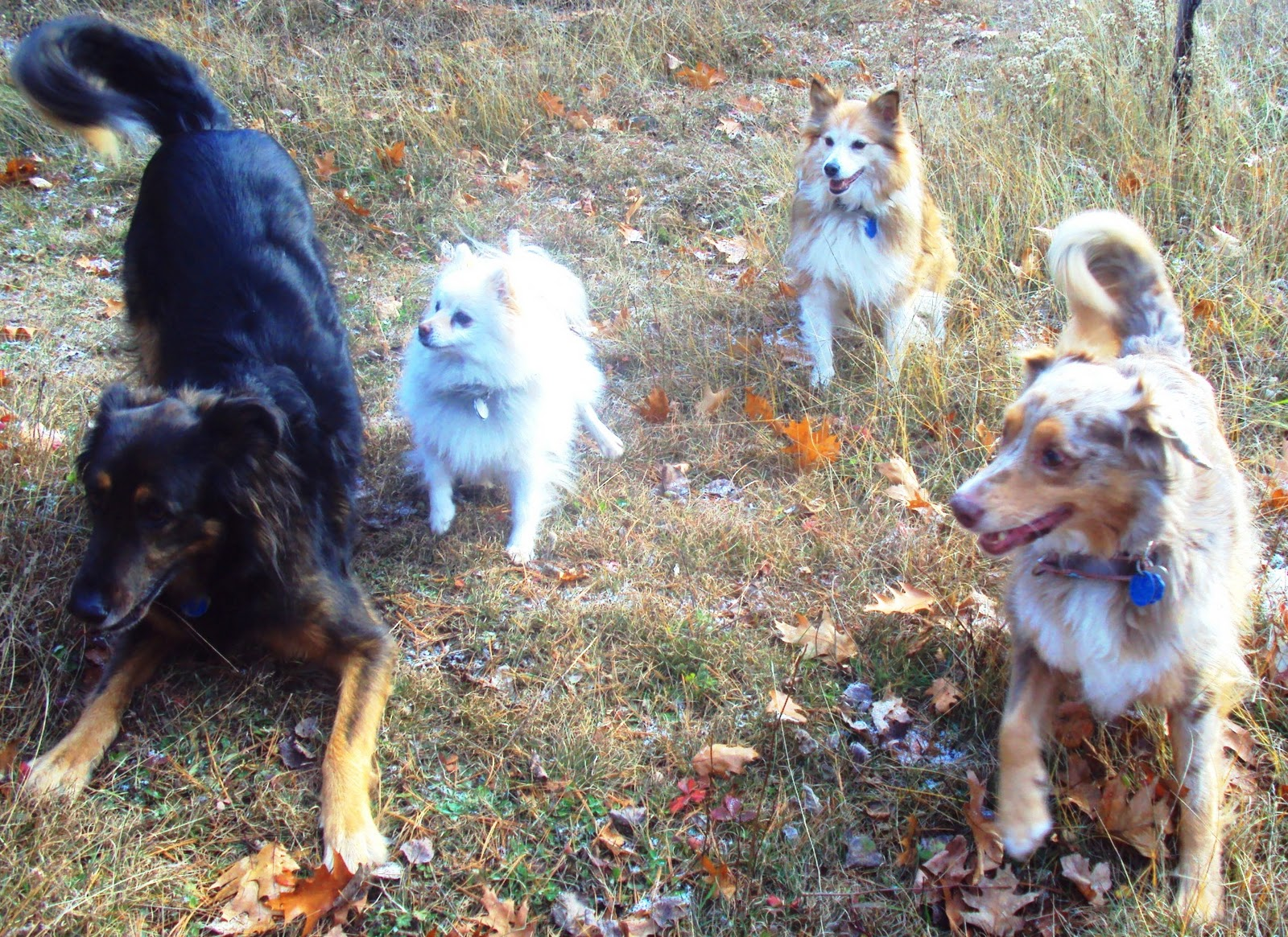Itching and scratching in dogs ottawa dog training and dog health abby zoey stevie and tasha on the trails solutioingenieria Images