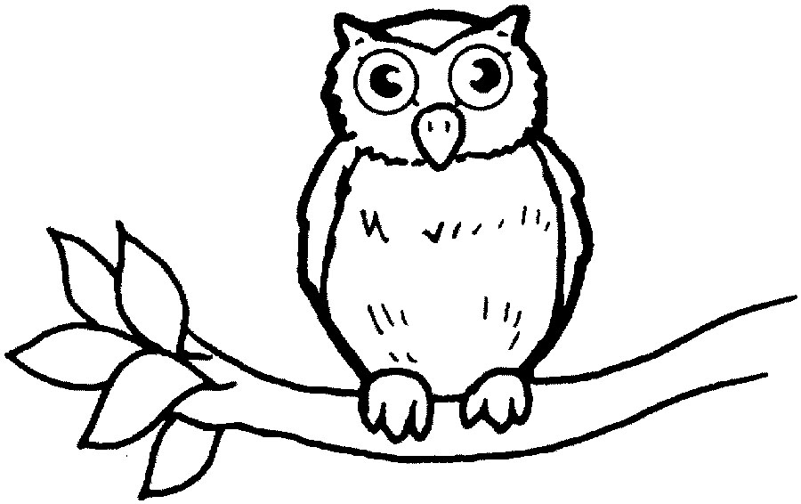 Owl babies colouring pages