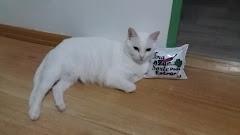 Clara Francesca, a suçuarana albina