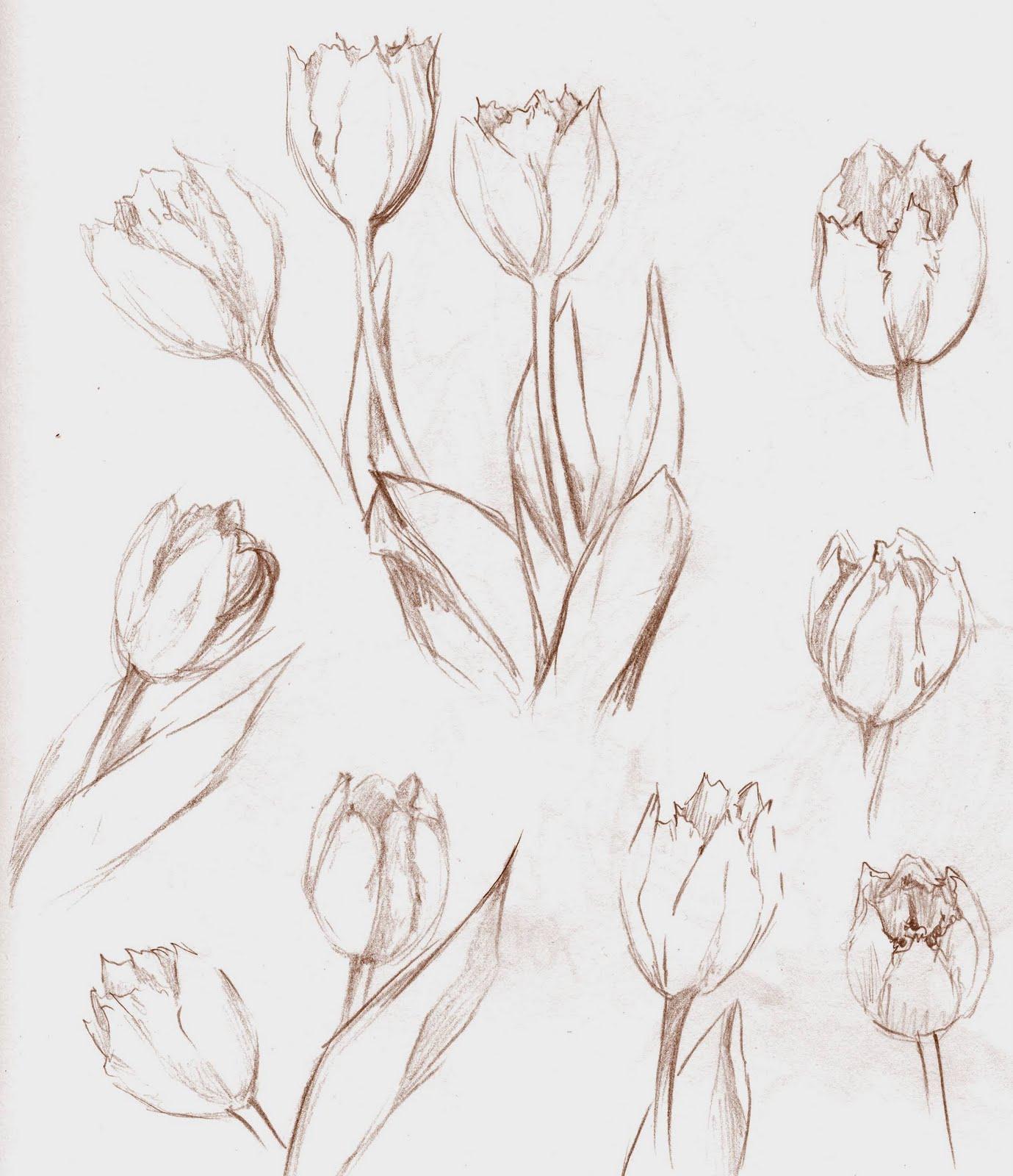 Küchentisch Zeichnen: Charoi's Sketchblog: Flowers