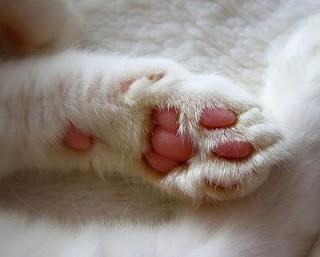 Limpia las patas de tu mascota