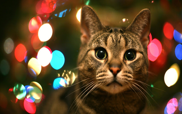 Free Download Christmas Pets HD Wallpapers  1280x800