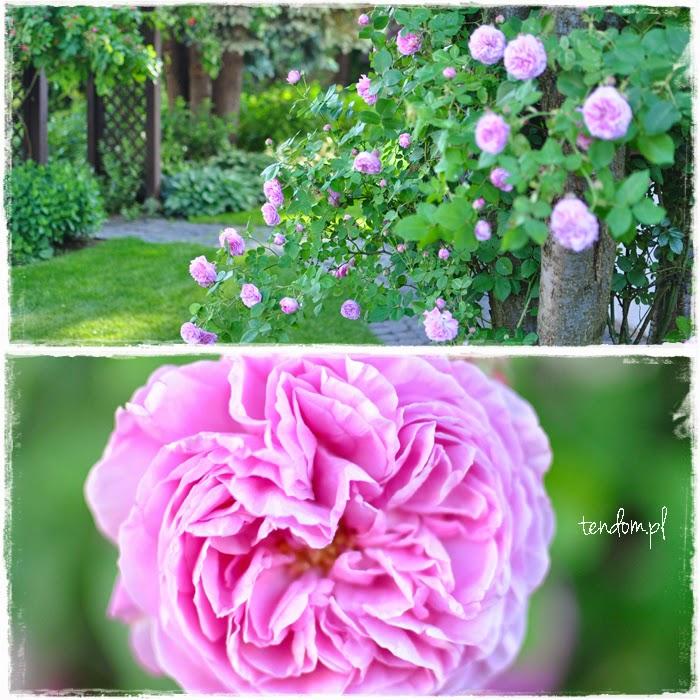 Magia czerwcowego ogrodu