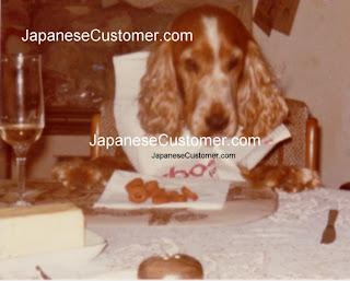 japanese dog copyright peter hanami 2010