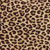 Leopard Print   Animals Pictures