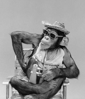 scimmia+occhiali+binocolo.jpg