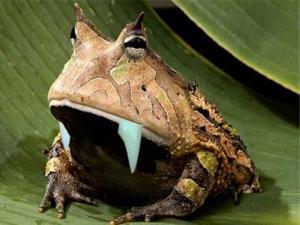 1.000 Spesies Baru Ditemukan di New Guinea