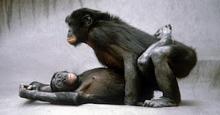 Inilah Ritual Aneh Aneh Yang Dilakukan Para Binatang [ www.BlogApaAja.com ]