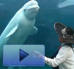 Delfin musical
