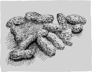 peanuts, still life, adobe ideas, ipad drawing, line drawing, digital art