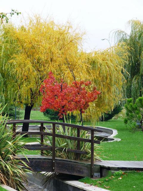 Flora de otoño en Vicálvaro -II