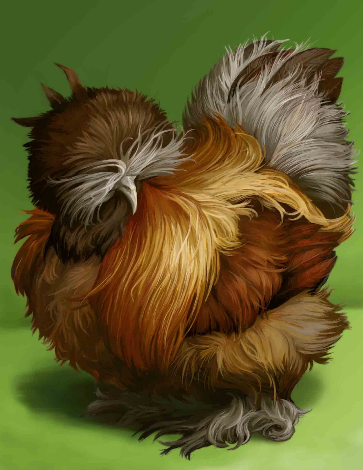 amber waves bearded bantam silkies free roosters while supply lasts