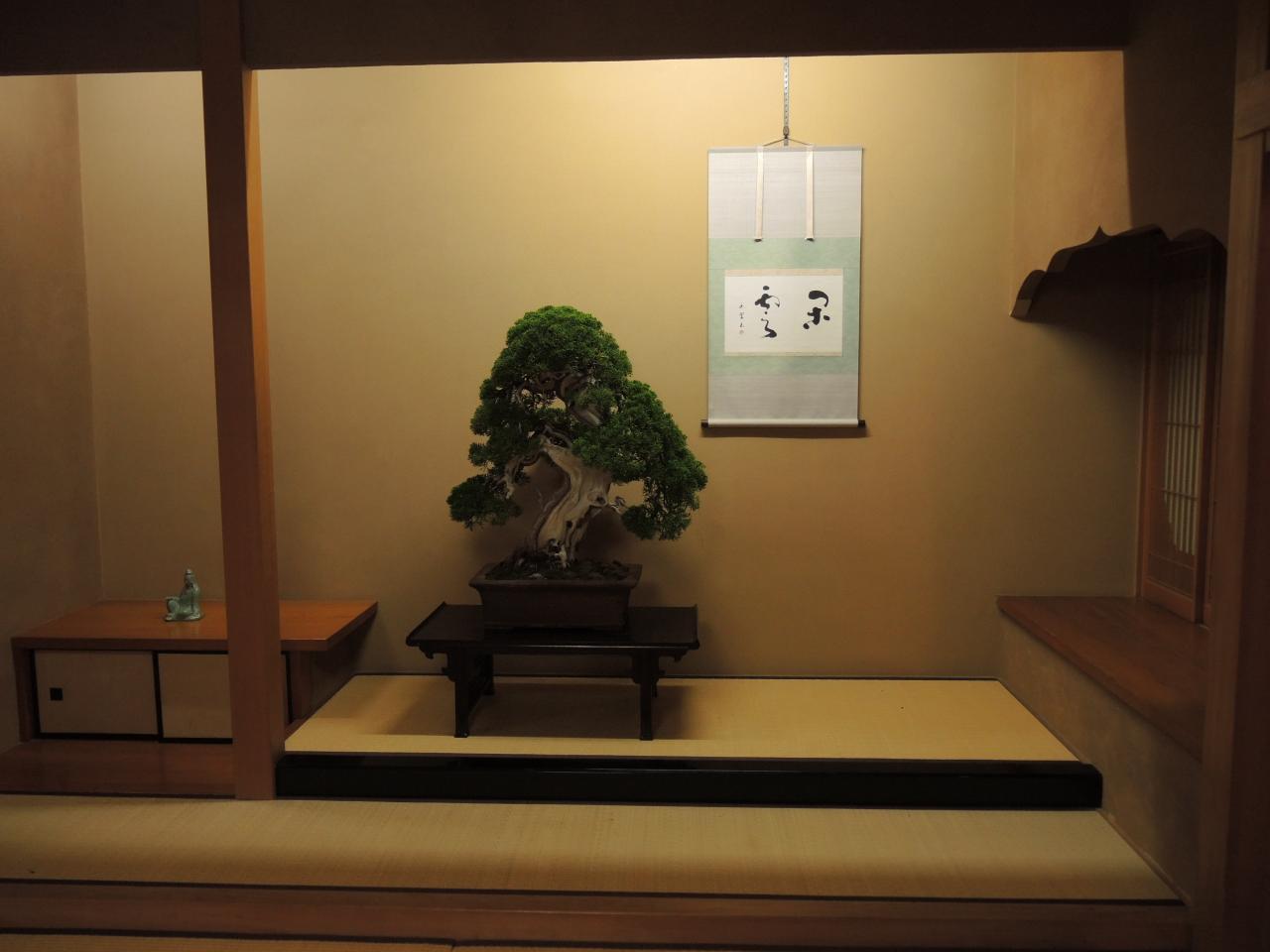 Katsura Leaf Bonsai