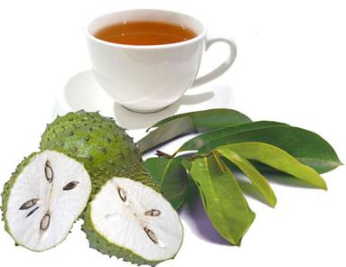 manfaat daun sirsak sebagai cara pengobatan herbal yang sangat baik digunakan.