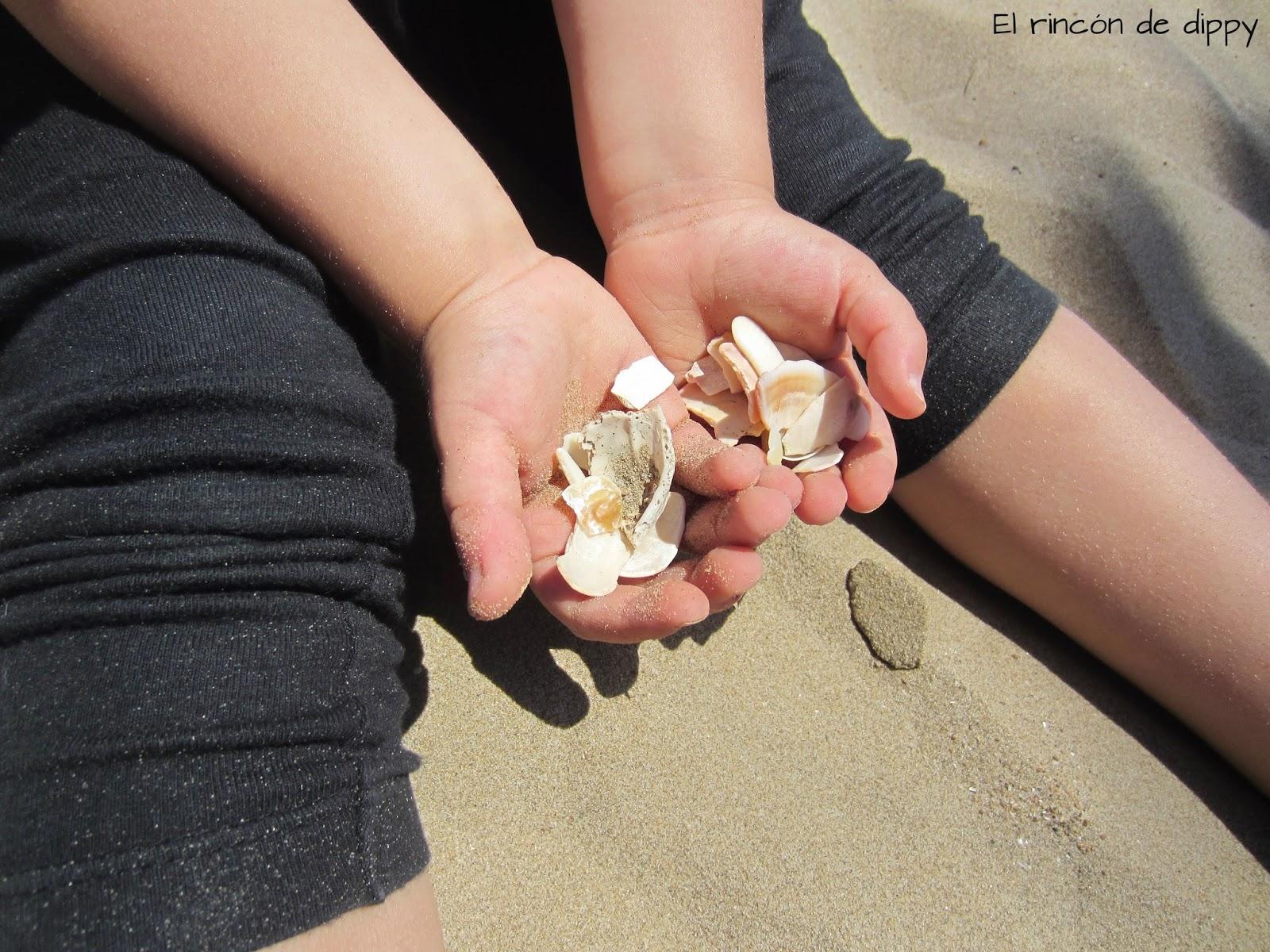 #miercoles-mudo-foto-conchas-playa