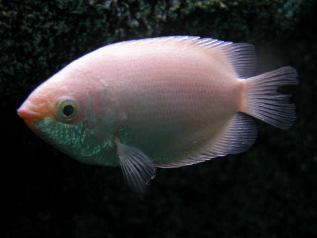 pescaitos nuevos peces en mi acuario enfermedades