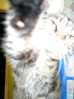 KittyKlaws