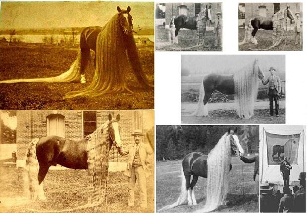 El caballo con la crista y la cola más larga en el mundo