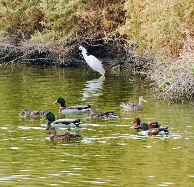 Waterbirds 017