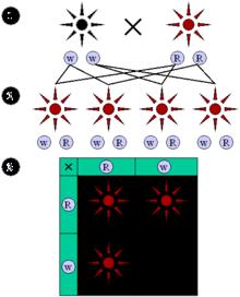 Penjelasan Hukum Mendel (Biologi)