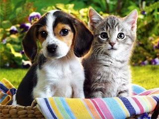 http://4.bp.blogspot.com/-pA1jlSM393k/TZXd2y6C-BI/AAAAAAAAAGw/6KWgYkVzB_8/s1600/cat_and_dog07.jpg