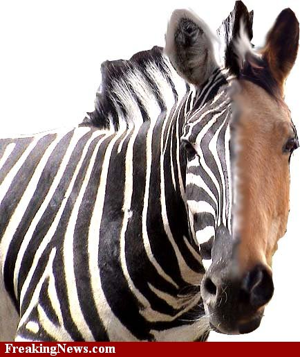 breeding big horse to small donkey