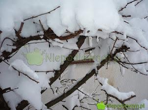 Przysłowia ogrodnicze na grudzień