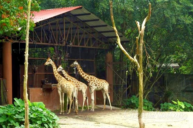 Pengalaman Ke Zoo Taiping Cikguhailmi